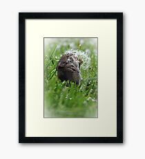 Mouse in Meadow Framed Print