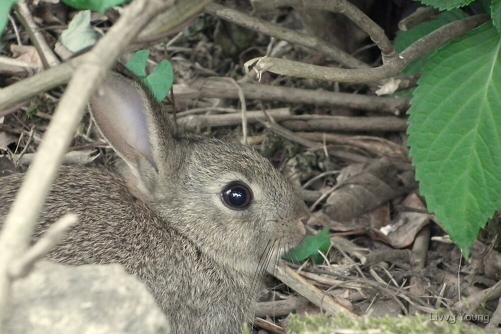 Wild Bunny. by Livvy Young