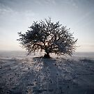 Winter tree by ilva