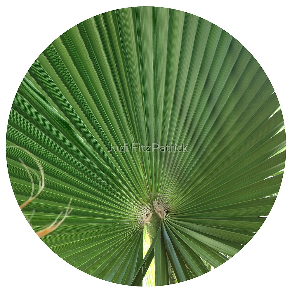 Palm Frond by Judi FitzPatrick