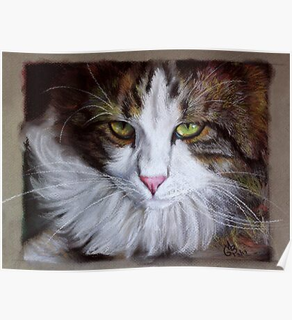 NORWEGIAN FOREST CAT Series #1  Poster