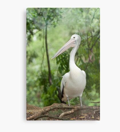 A wonderful bird is the Pelican.... Metal Print