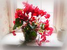 Red Cyclamen by MotherNature