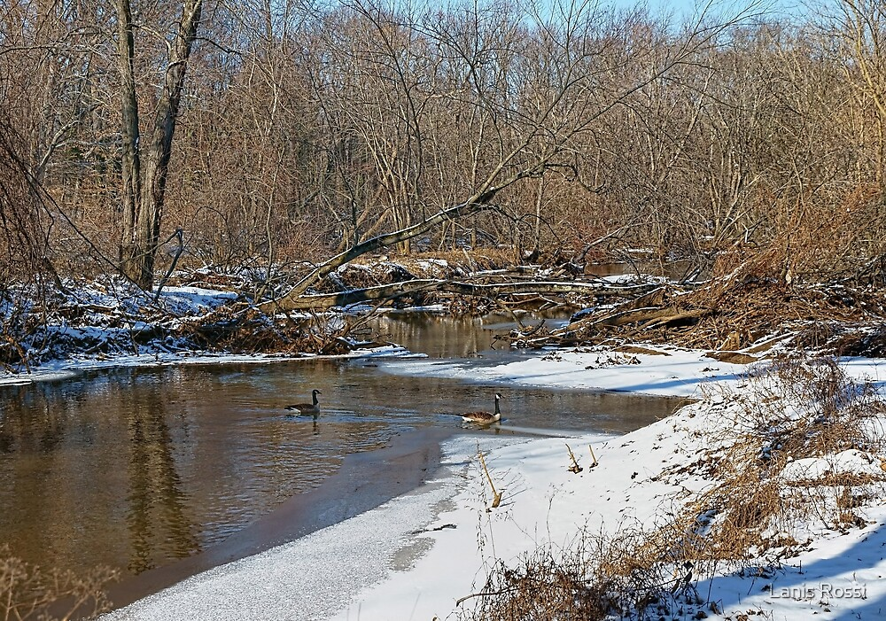New Jersey Winter by Lanis Rossi