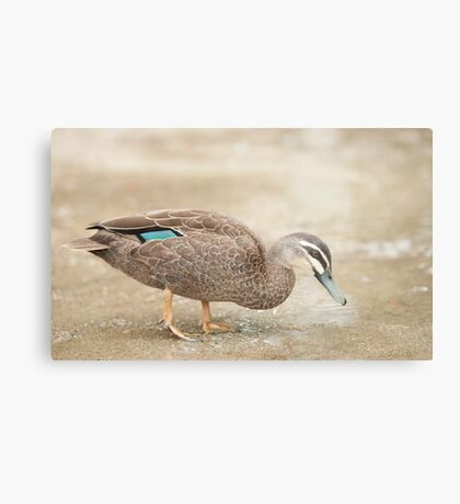 Mr McDuck Metal Print