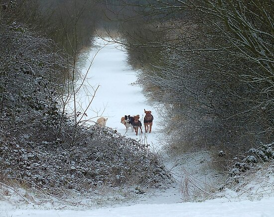 Dogs in Country Snow Scene by philipclarke