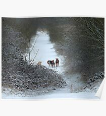 Dogs in Country Snow Scene Poster