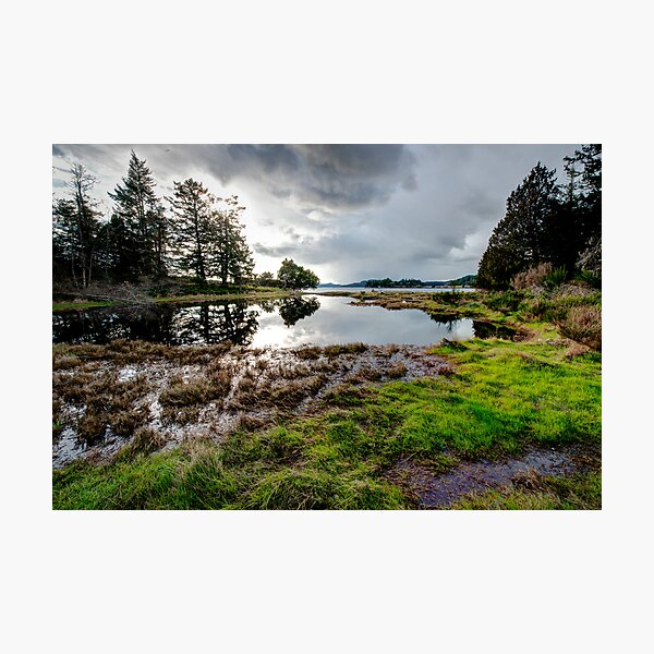 The Swamp at Winter Cove Photographic Print