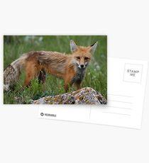 Brother Fox #1 Postcards