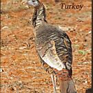 Wild Turkey by Thomas Murphy