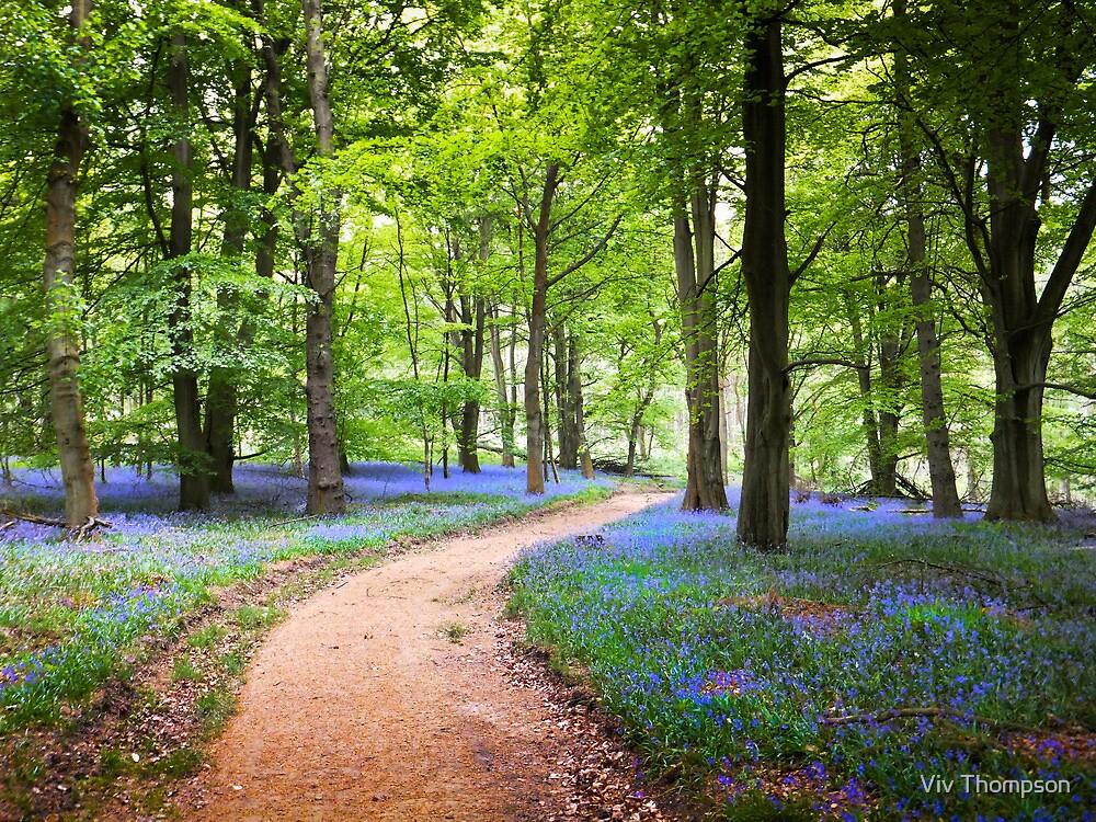 A Carpet of Blue by vivsworld