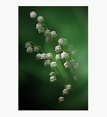 Little Bells Photographic Print