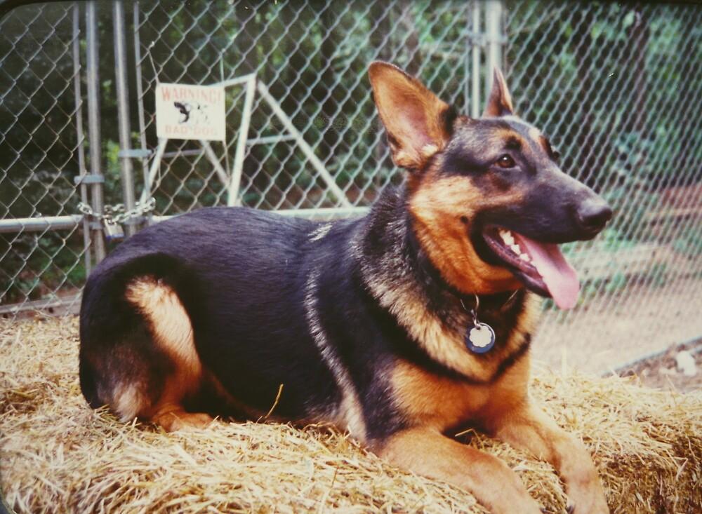 Gypsy, A German Shepherd  by Vivian Eagleson