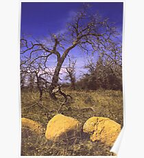 Tree with Big Stones Poster