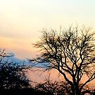 Sunset tree silhouettes by ©The Creative  Minds