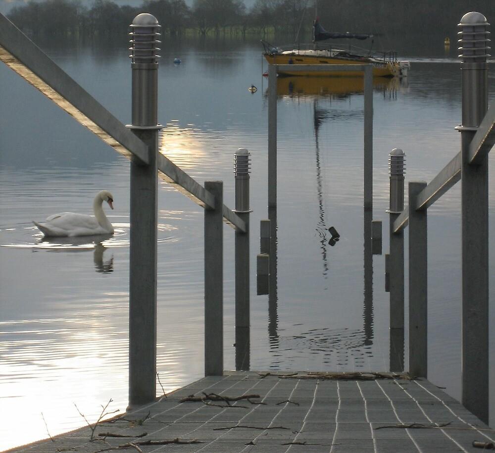 Swan on Loch Lomond 1 by jojobob