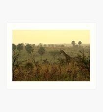 Am frühen Morgen Giraffe Kunstdruck
