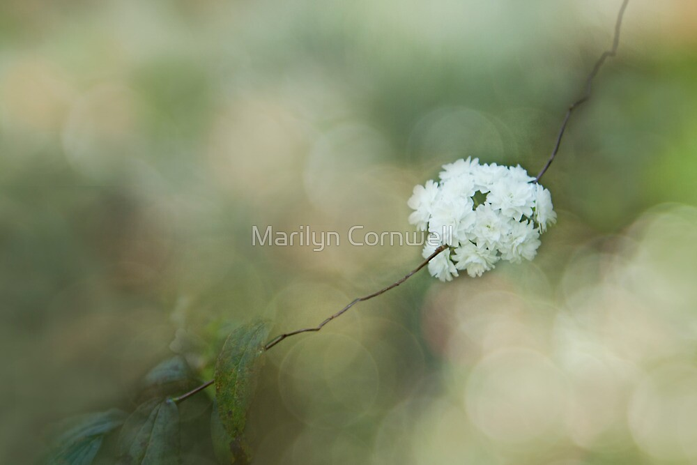Floral Frills by Marilyn Cornwell
