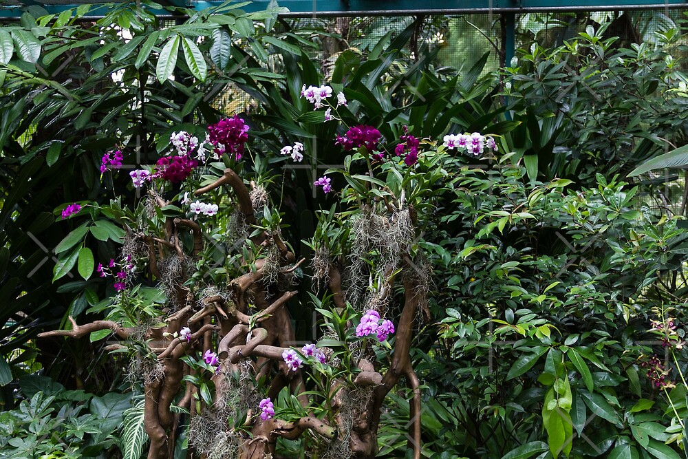 Multiple orchid flowers on a tree by ashishagarwal74