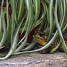 In the Spider Plant by gharris