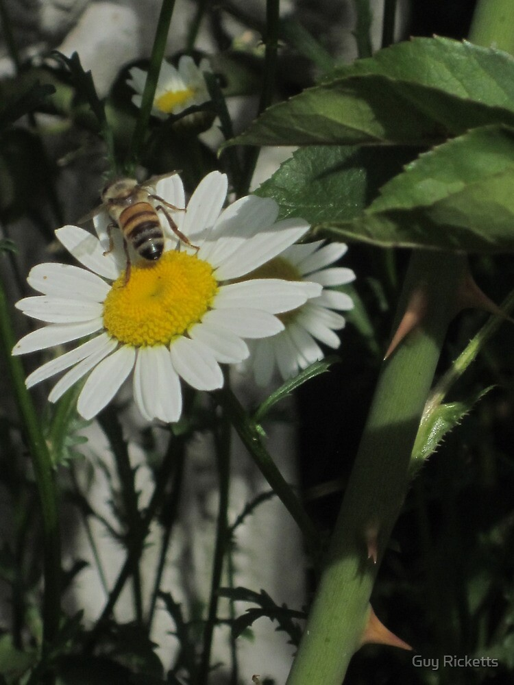 Daisy and Friend by Guy Ricketts