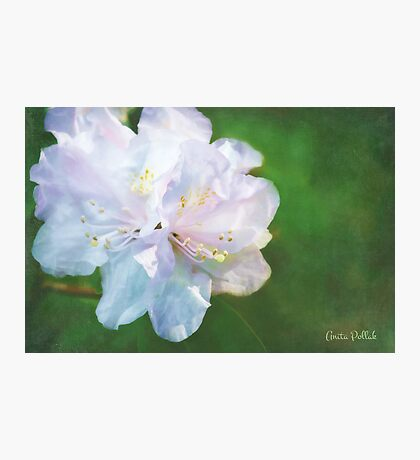 Belle of the Balta Photographic Print