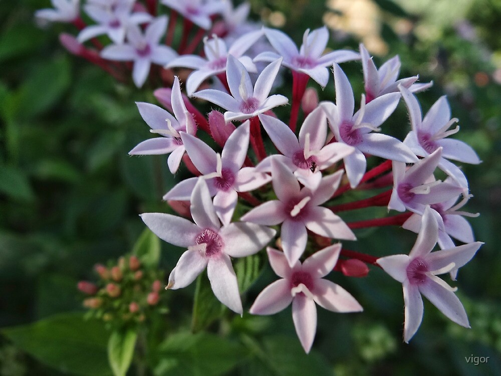 Pink Flora by vigor