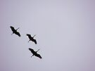 Sandhill Cranes Overhead by Betty  Town Duncan