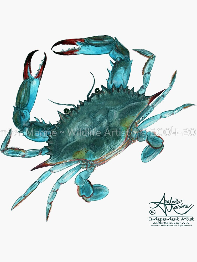 """""""Blue Crab"""" by Amber Marine, watercolor painting, © 2013 by AmberMarine"""