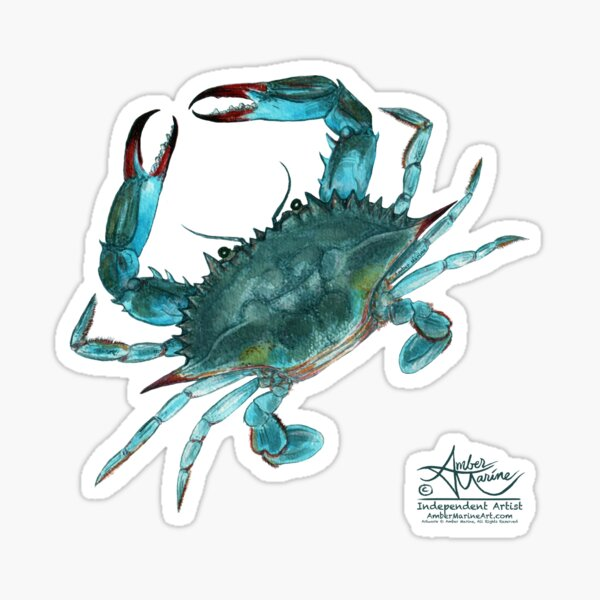 """""""Blue Crab"""" by Amber Marine, watercolor painting, © 2013 Sticker"""