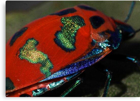 Flying Opal by Joel Fourcard