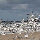 Take Off to Bird Island - Broken Head - Australia  by Louise Linossi Telfer