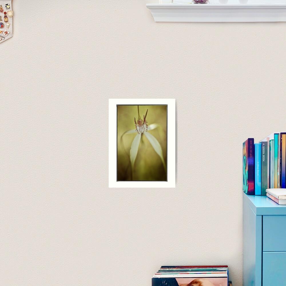 White Spider Orchid (Caladenia longicauda). Art Print