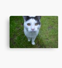 Manx Cat Metal Print