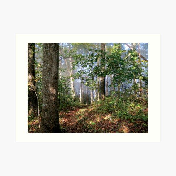 A Walk thru the Woods Art Print