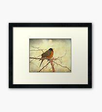 American Robin in The Springtime Framed Print