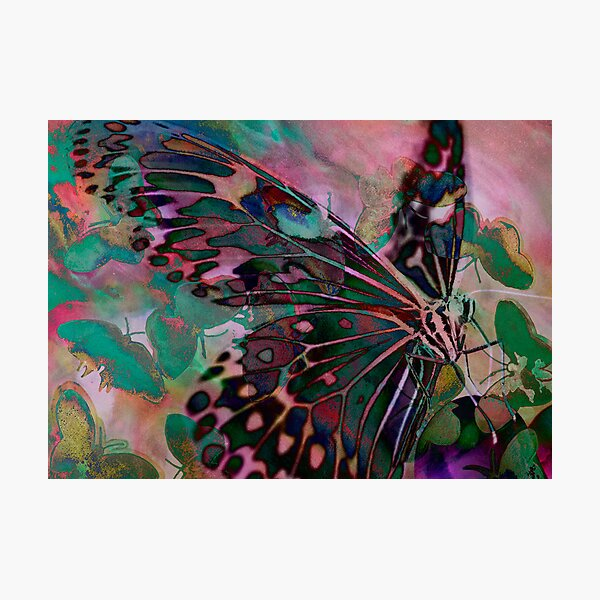 Digital: Butterflies layered delicately with a soft pink background Photographic Print
