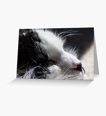 Content in the Sun Greeting Card