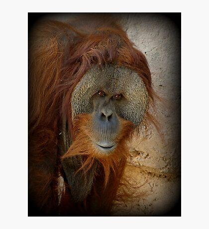 Sumatran Orangutan~ My name is Ibu Photographic Print