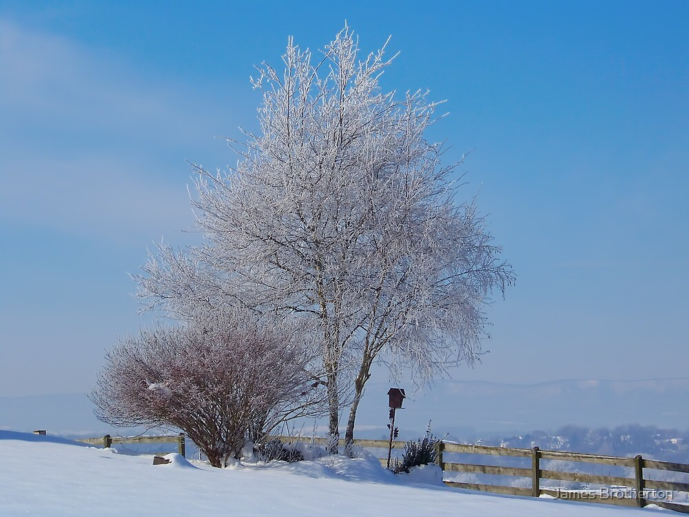 A Winter Morning by James Brotherton