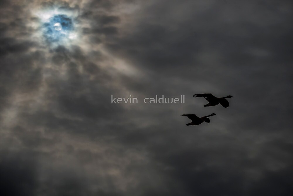 flight by kevin  caldwell