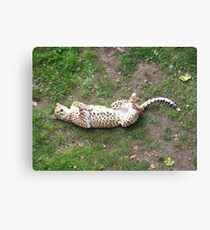 Playing Dead Canvas Print