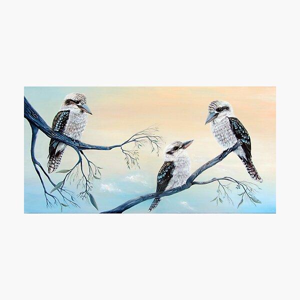 Kookaburra Charm Photographic Print