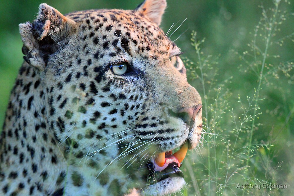 Marthly male up close by jozi1