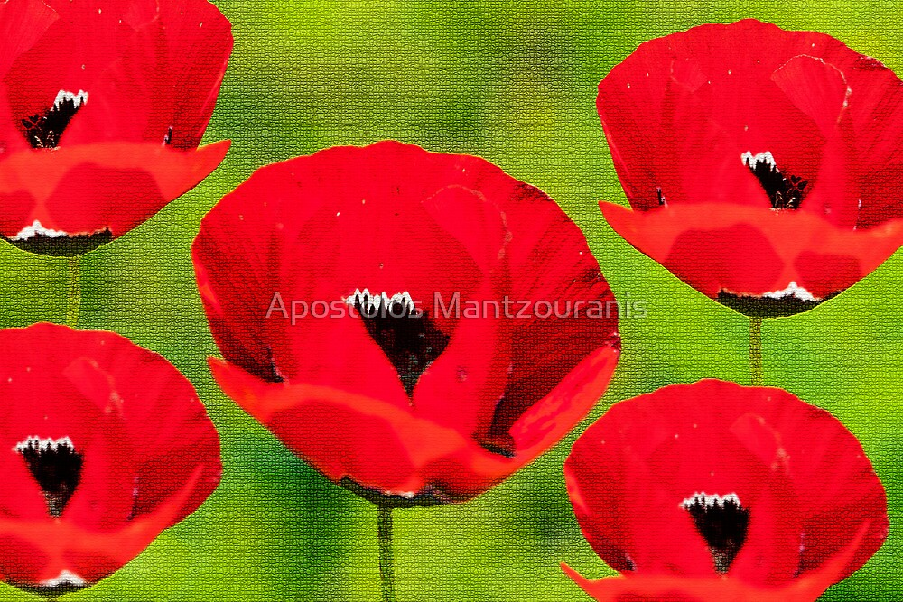 Red Flowers by Apostolos Mantzouranis