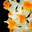 Egg Yolk and White by Irina Chuckowree