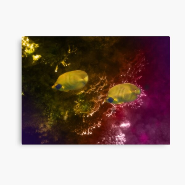 The Lovely Masked Butterflyfish In The Red Sea Canvas Print