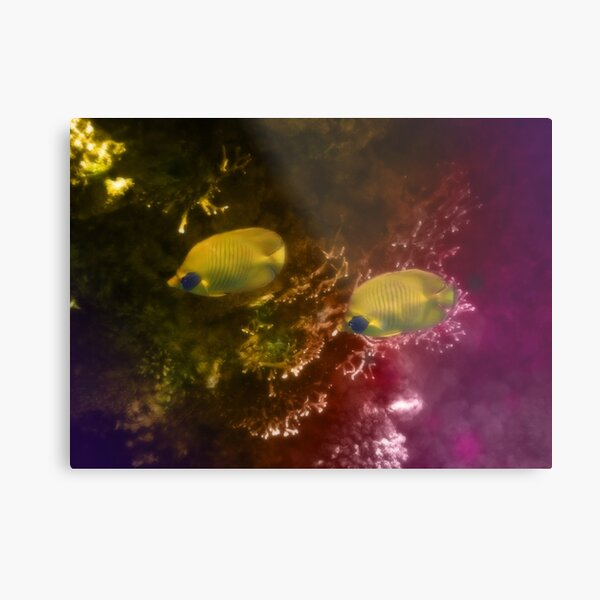 The Lovely Masked Butterflyfish In The Red Sea Metal Print