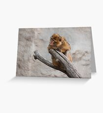 Macaque portrait Greeting Card