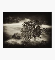 Carpeted Mist.. Photographic Print